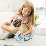 Pet Care – A Major Responsibility