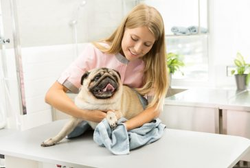 Pet Care - A Major Responsibility