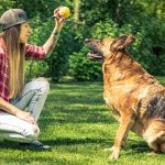 Create a Better Relationship With Your Dog Through Training.